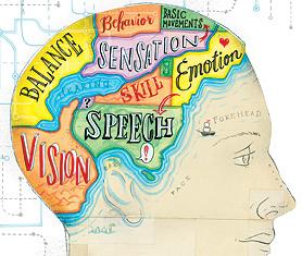 brain-diagram-01