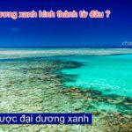 Chiến lược đại dương xanh (P2: Đại dương xanh hình thành từ đâu ?)